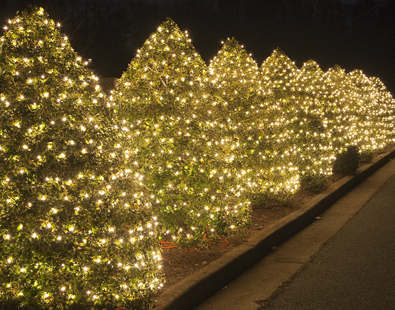 bushes_wrapped_lights_0420